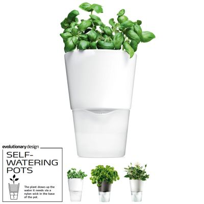 Awarded Design Vase: EVA SOLO SELF-WATERING HERB POT - Color: Frosted Glass (Plant NOT INCLUDED)