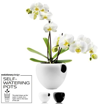 Awarded Design Vase: EVA SOLO SELF-WATERING ORCHID POT - White (Orchid NOT INCLUDED)